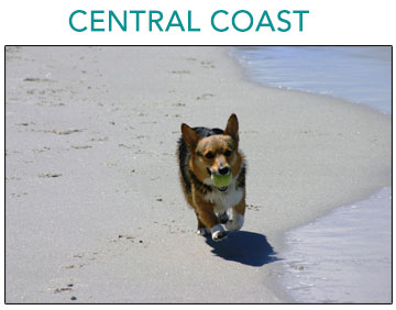 Dog-Friendly Beaches in Northern California
