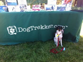 little dog in front of dogtrekker table