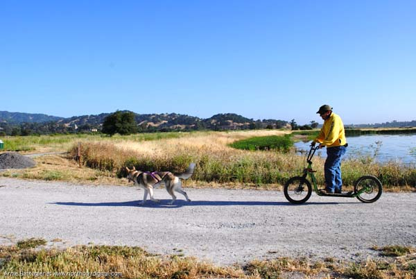 dog and guy on bike
