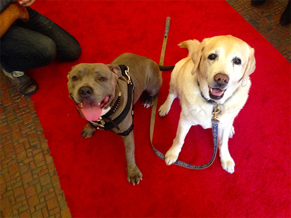 Kayla & Lola Walk the red carpet