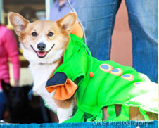 Dog in costume for ARF event