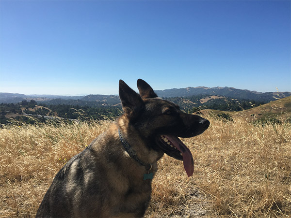 Dog hiking Acalanes Ridge