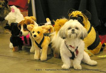 little dog with stuffed dogs