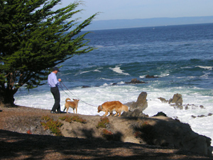 Beach Dogs in Pacific Grove