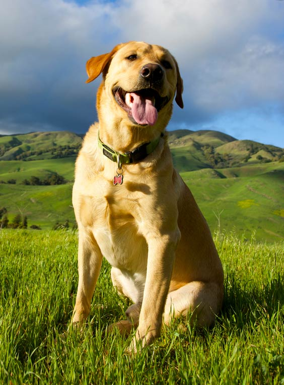 Dog in the California hills