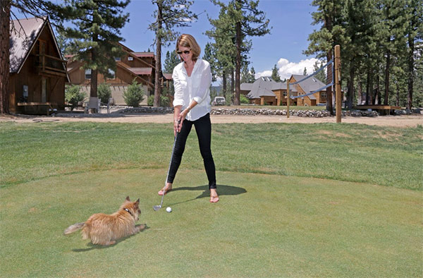 Golfing with dog at Chalet View Lodge