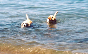 dogs in the water at the beach