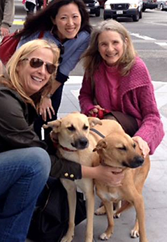 Rescued dogs in San Francisco