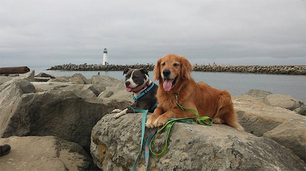 Dogs on rocks in Santa Cruz