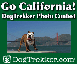 California Photo Contest Ad