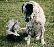 Dog and Skunk