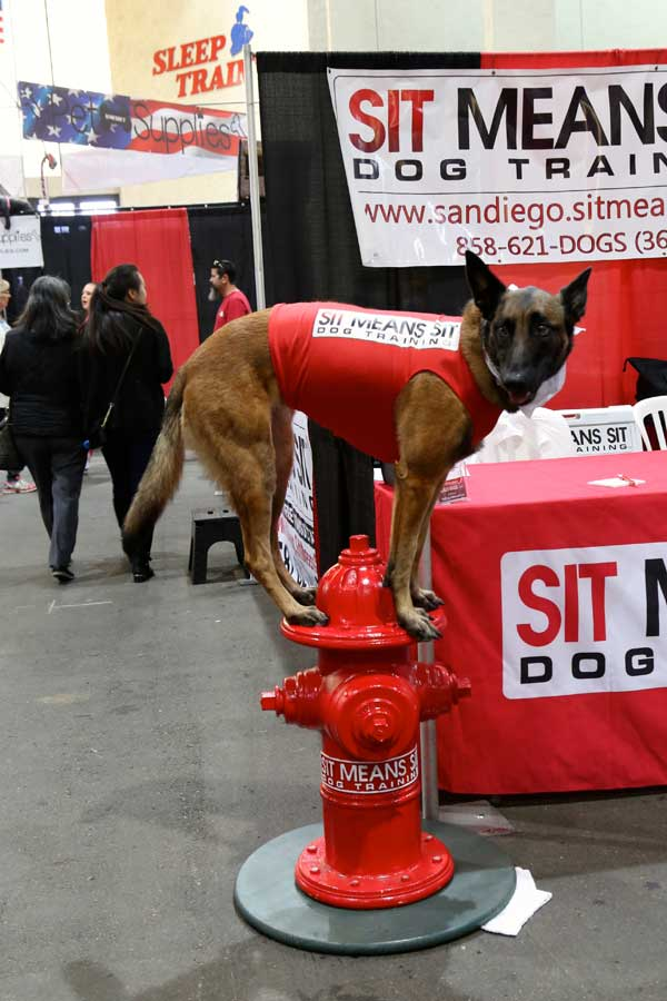 Dog on fire hydrant at Pet Expo