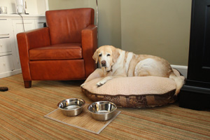 Kayla on a dog bed in her suite