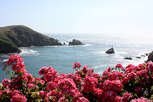 View of Mendocino Coast
