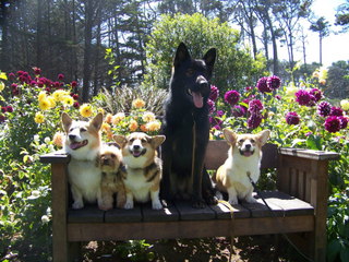 Dogs on a bench at Mendocino Coast Botanical Gardens