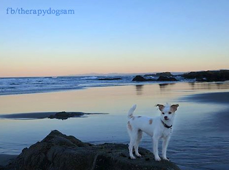 Dog on beach in mendocino
