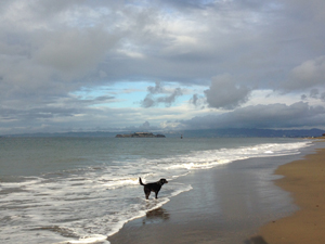 dog at crissy field
