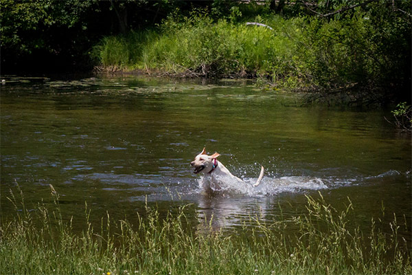 River Running With Rover