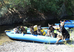 Dogs on rafts Russian River