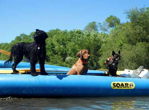 Dogs on the river