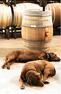 dogs in front of wine barrels
