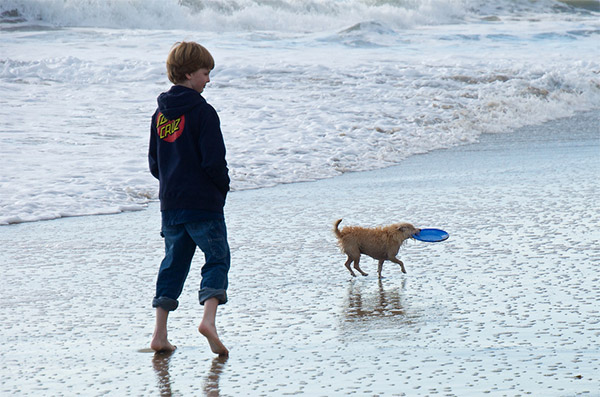 Santa Cruz beach dog with frisbee