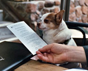 dog reading a menu