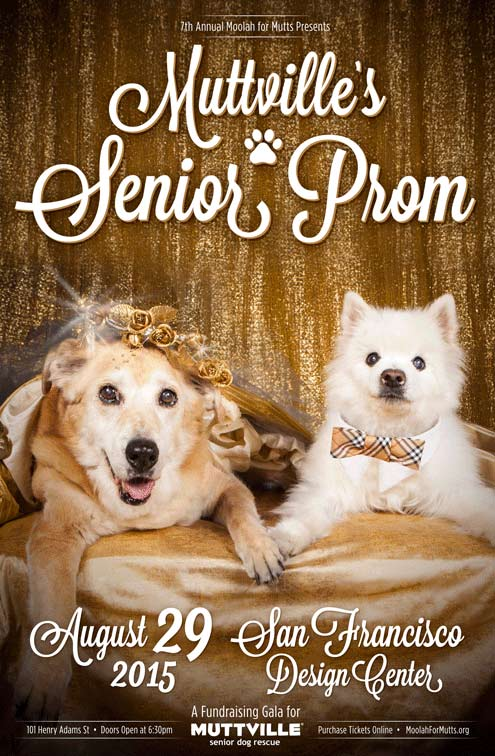 Muttville dogs dressed for the Senior Prom gala