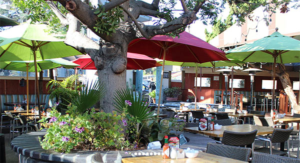 Outdoor dog-friendly dining at The Sycamore Kitchen