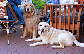 dogs at restaurant in Carmel