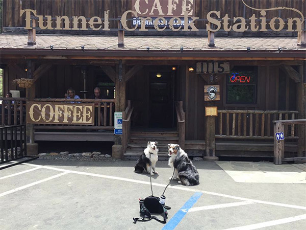 Dogs at Tunnel Creek Cafe