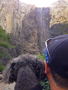Dog looking at falls in Yosemite