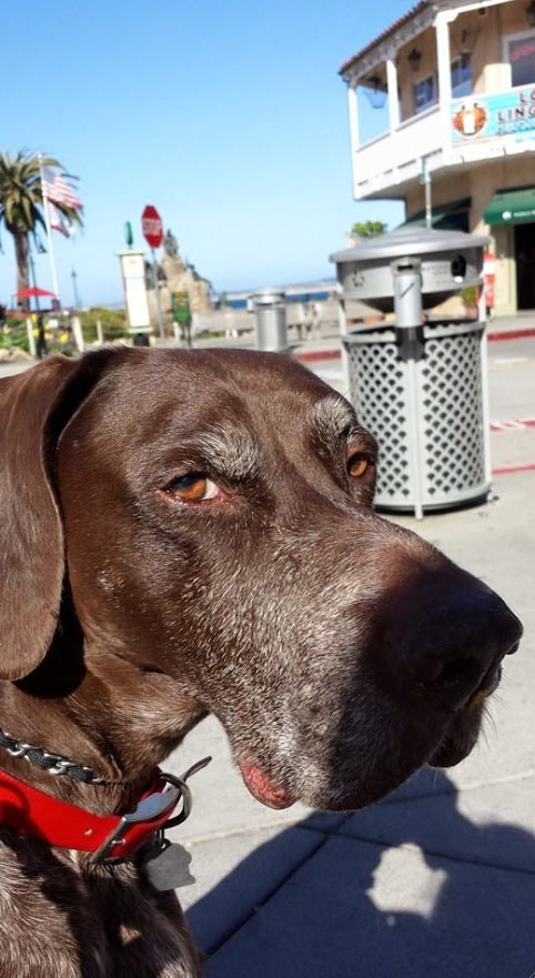 Boomer at Cannery Row