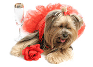 Days of wine, roses and dogs