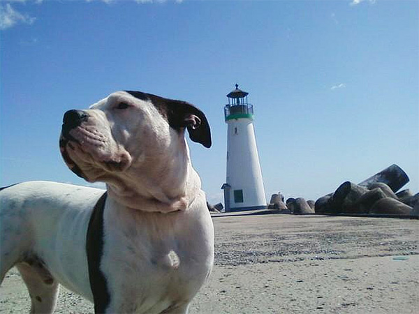 Dog at the lighthouse in Santa Cruz