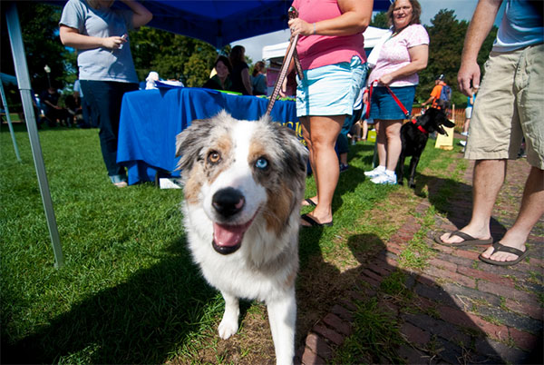 Walk for Animals event in Napa