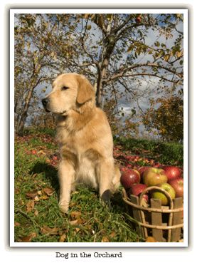 Dog in orchard