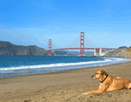 Dog in front of Golden Gate Bridge