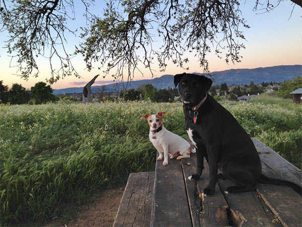 Dogs on a bench in Napa
