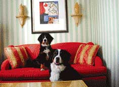 Kimpton couch dogs
