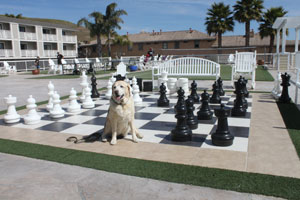 Kayla on a giant chess board