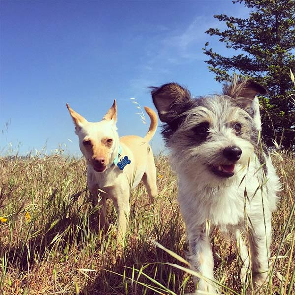 Dogs hiking in Marin