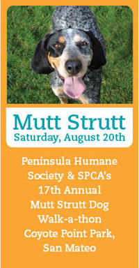 Mutt Strut Dog