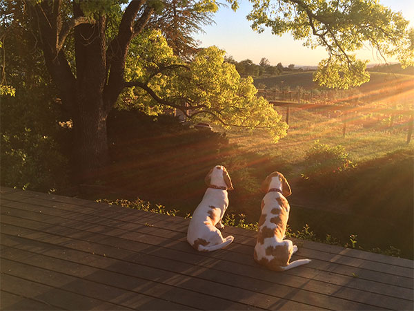 Eleanor and Annabelle looking over the
