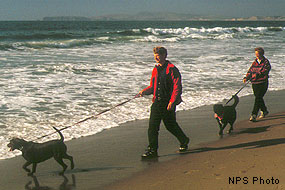 Dog walkers, Point Reyes National Seashore