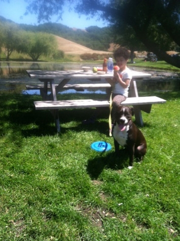Picnic by the pond at Marin French Cheese Company