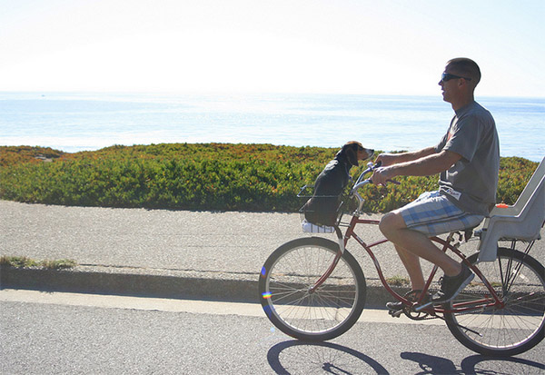 Puppy riding in bike basket in Santa Cruz