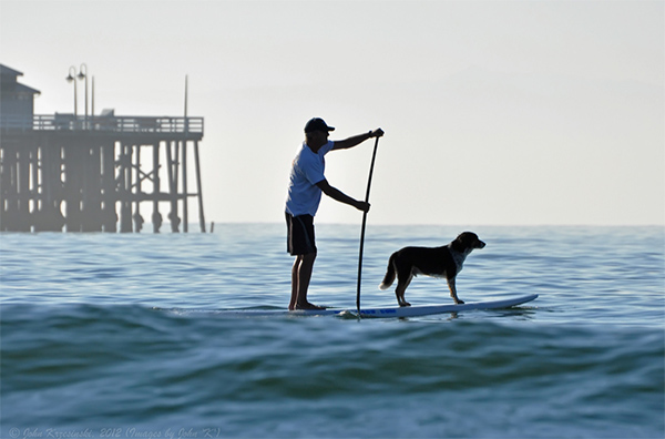 Man and dog on stand up paddle board