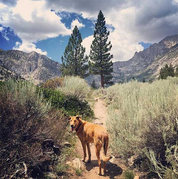 A dog named Smalls hiking a beautiful trail