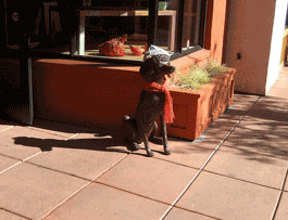 Stylin Dog in Downtown Sonoma